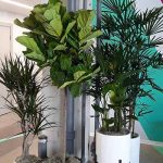 Plants help lower background noise
