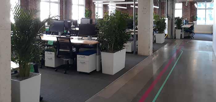 plant care silicon valley